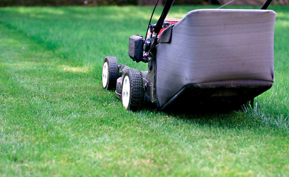 Koszenie trawników – stałe zlecenia