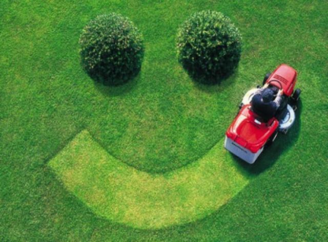 Pielęgnacja i utrzymanie trawnika